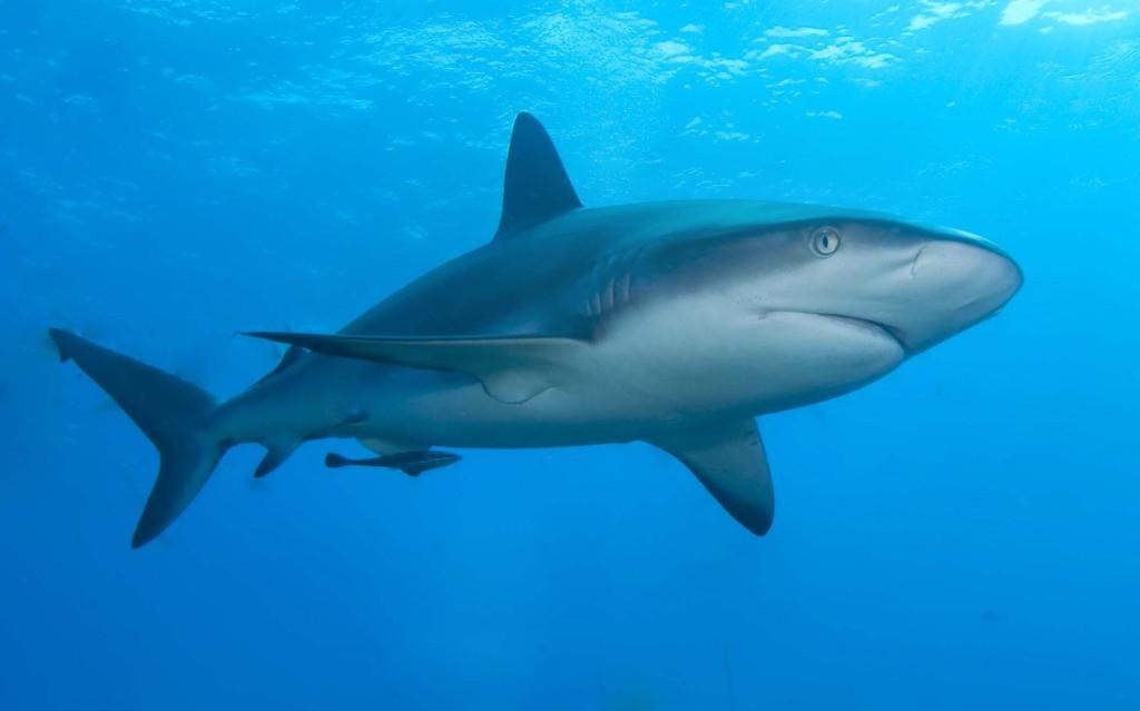 Efectos de actividades humanas en megafauna marina