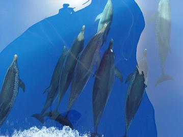 Monitoreo de megafauna marina